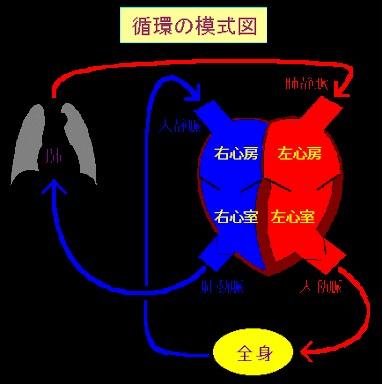 f:id:aiko-and-sibajyun:20161118233759j:image