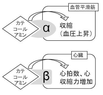 f:id:aiko-and-sibajyun:20170102141815j:image