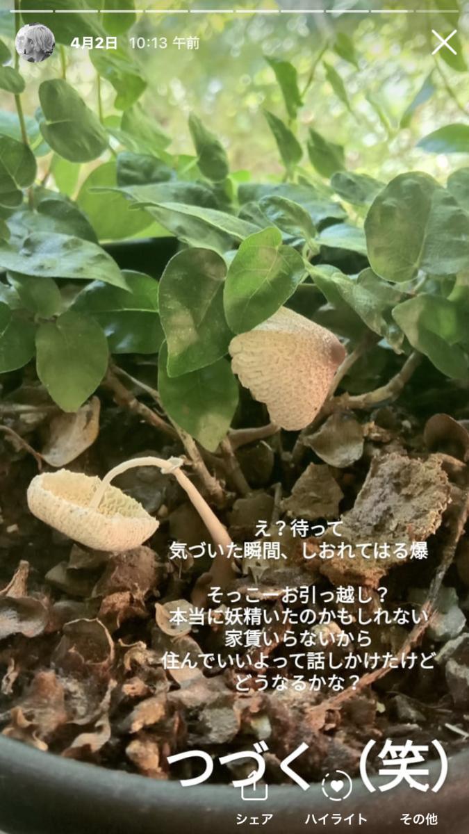 f:id:aikohana:20210605075918p:plain