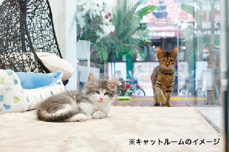 f:id:aikototan:20170201014157j:plain