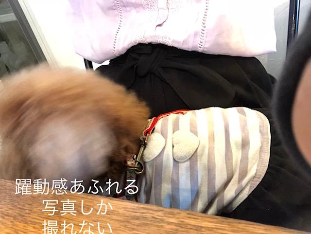 f:id:aikowakakusa16:20180504114203j:plain
