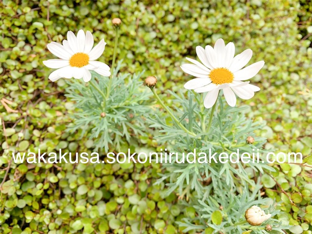 f:id:aikowakakusa16:20200327160744j:image