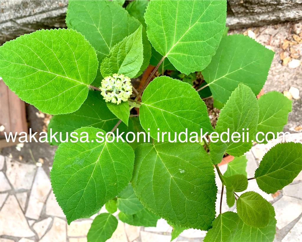 f:id:aikowakakusa16:20200630121100j:image