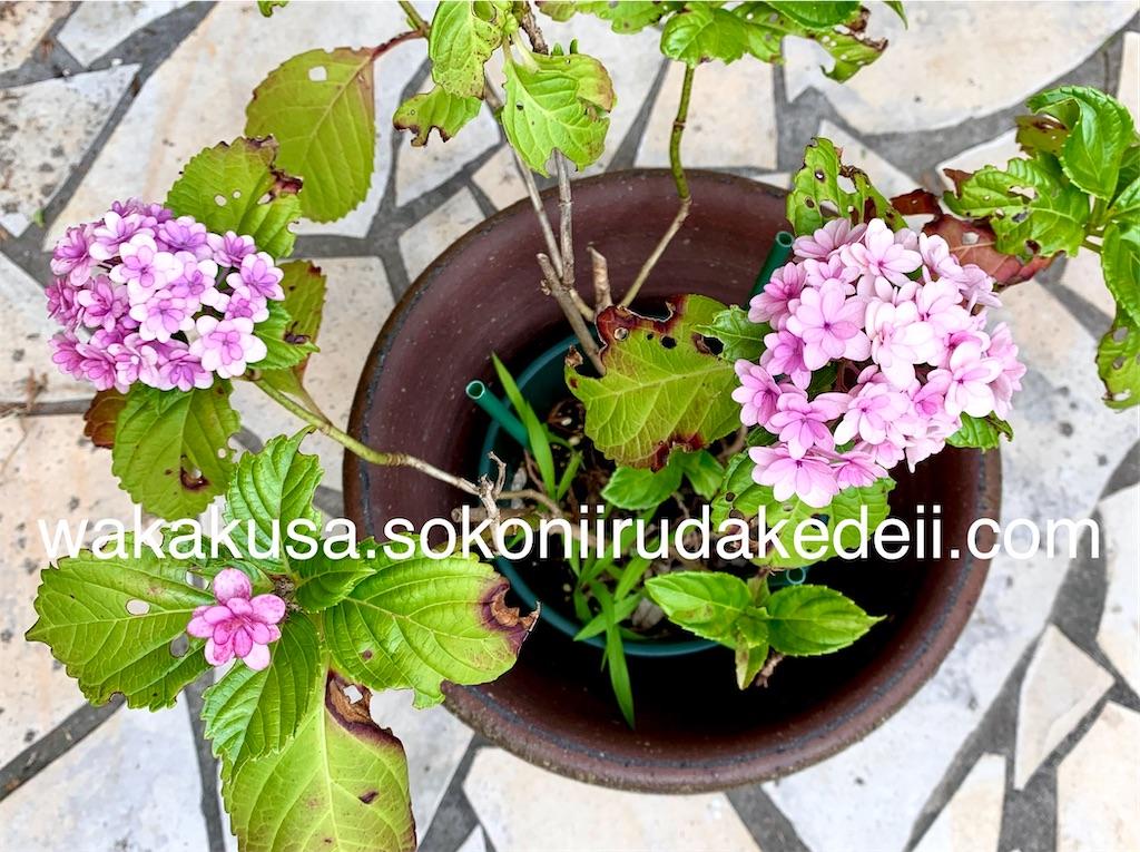f:id:aikowakakusa16:20200630121233j:image