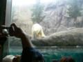 旭山動物園(シロクマ)