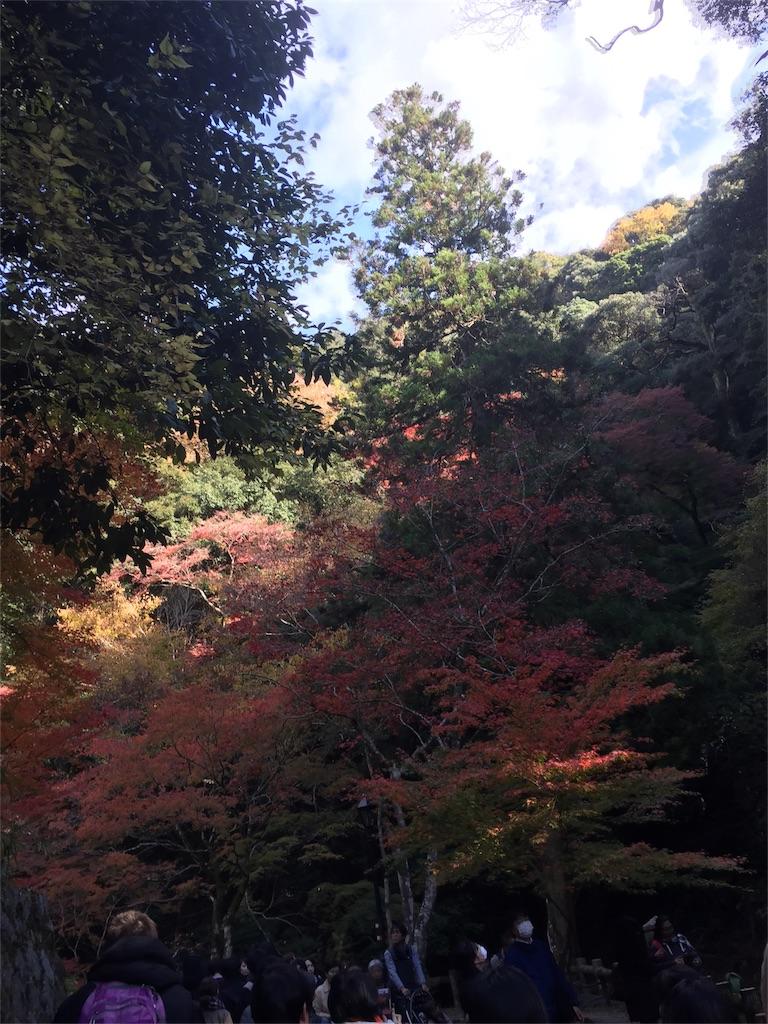 f:id:ainichi:20181129201313j:image
