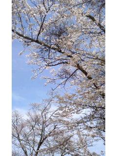 f:id:aipon2004:20100404105712j:image