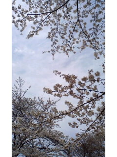 f:id:aipon2004:20100404122614j:image