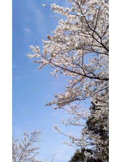 f:id:aipon2004:20100404133340j:image