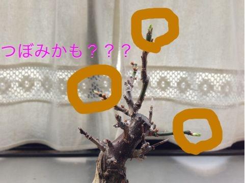 f:id:aipon2004:20130308083042j:image