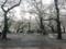 [桜][Park]