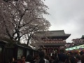 [桜][Garden]