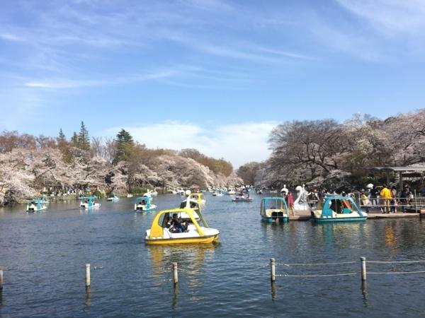 [Park][桜]