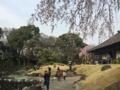 [Garden][桜]