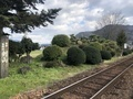 [Travel][Garden][Train]