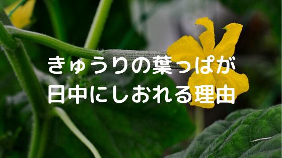 葉っぱ きゅうり
