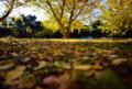 「昆虫の視点」 Nikon D800 / Nikkor 20mm f2.8