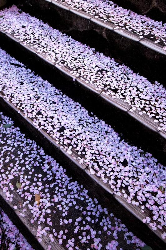 「桜の階段」 RICOH GR DIGITAL Ⅲ
