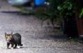 「路地裏の視線」 Nikon D800 / Nikkor 300mm f4
