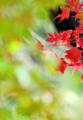 「秋風」 Nikon D90 / Nikkor 180mm f2.8