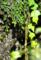 「飛沫」 Nikon D90 / Nikkor 180mm f2.8