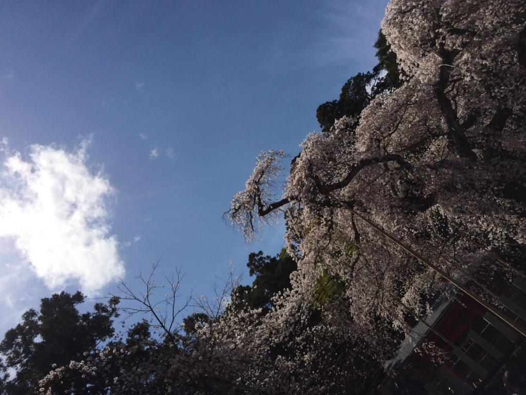 f:id:aizawa-yukie:20170412221646j:plain