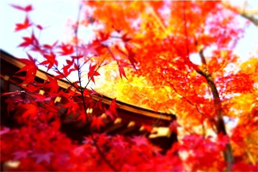 f:id:aizo_k:20170304161703j:image
