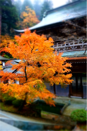 f:id:aizo_k:20170305012828j:image