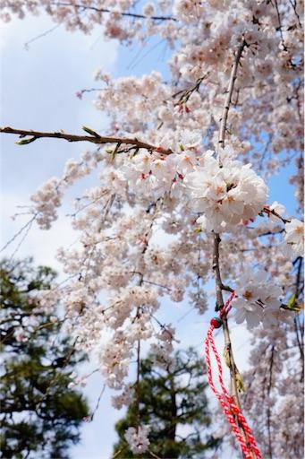 f:id:aizo_k:20190414151520j:image