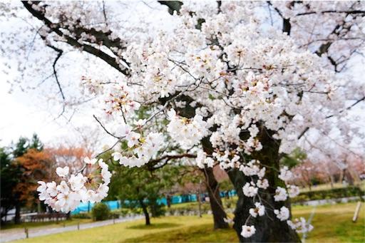 f:id:aizo_k:20190414151524j:image