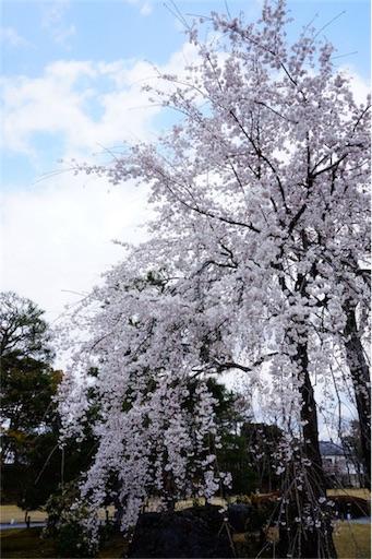 f:id:aizo_k:20190414151527j:image