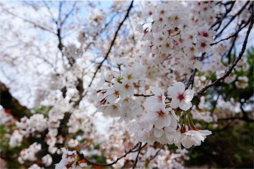 f:id:aizo_k:20190414151534j:image