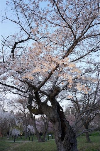 f:id:aizo_k:20190421164421j:image