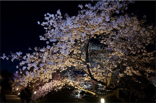 f:id:aizo_k:20190421164659j:image