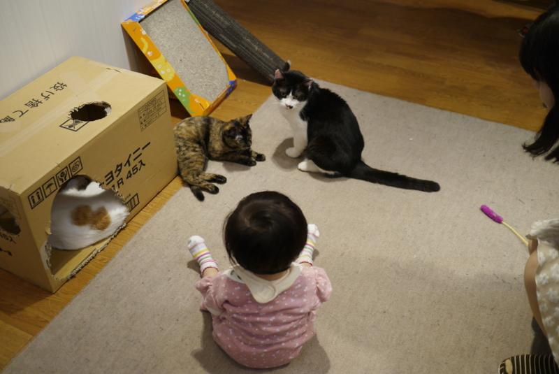 f:id:ajisashi:20140330144528j:image