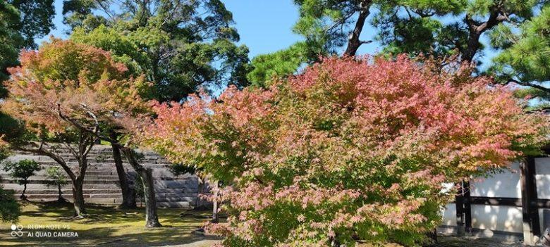 京都 二条城本