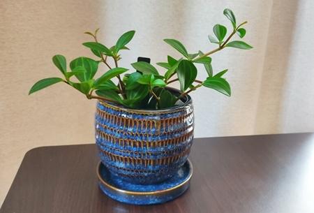鉢植えグリーンの画像