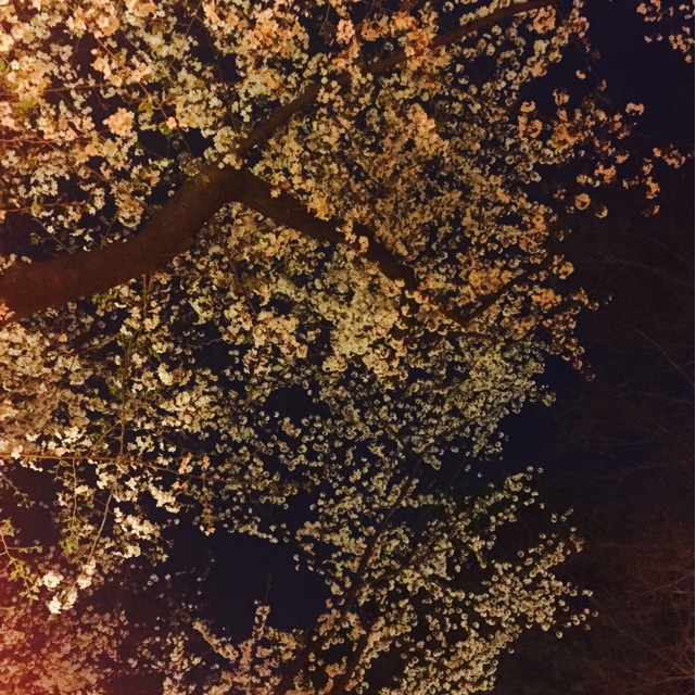 66g 桜 写真の撮り方