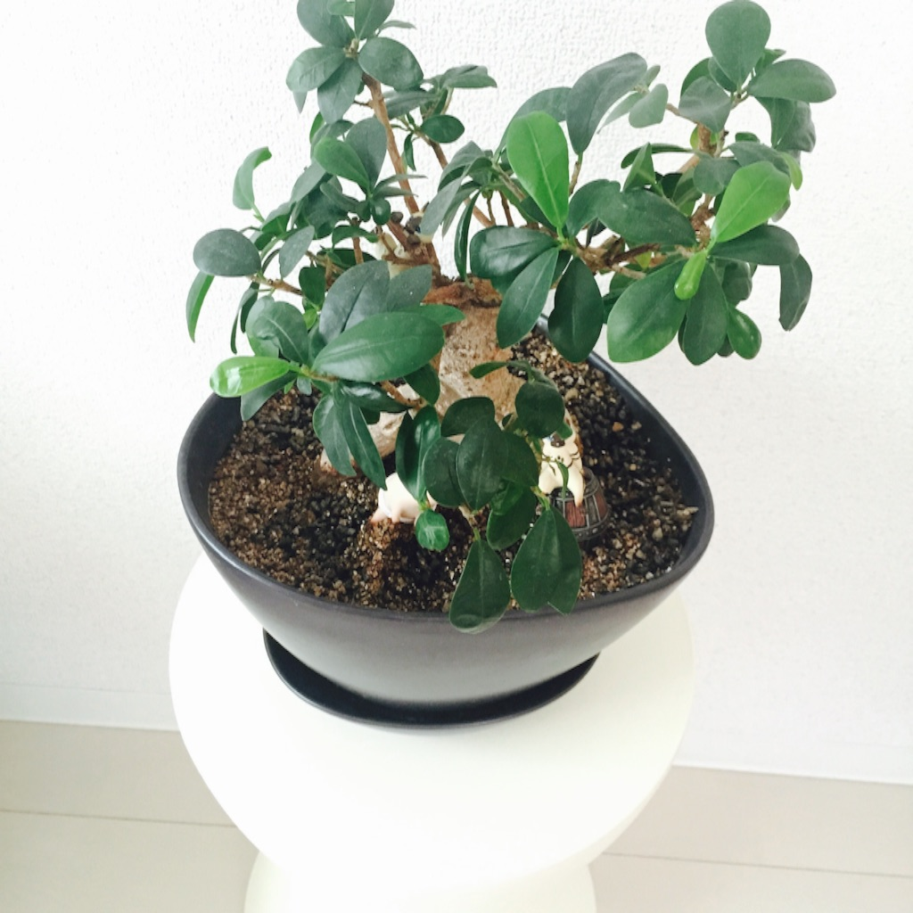カルテル プリンスアハ 植物を置いた画像