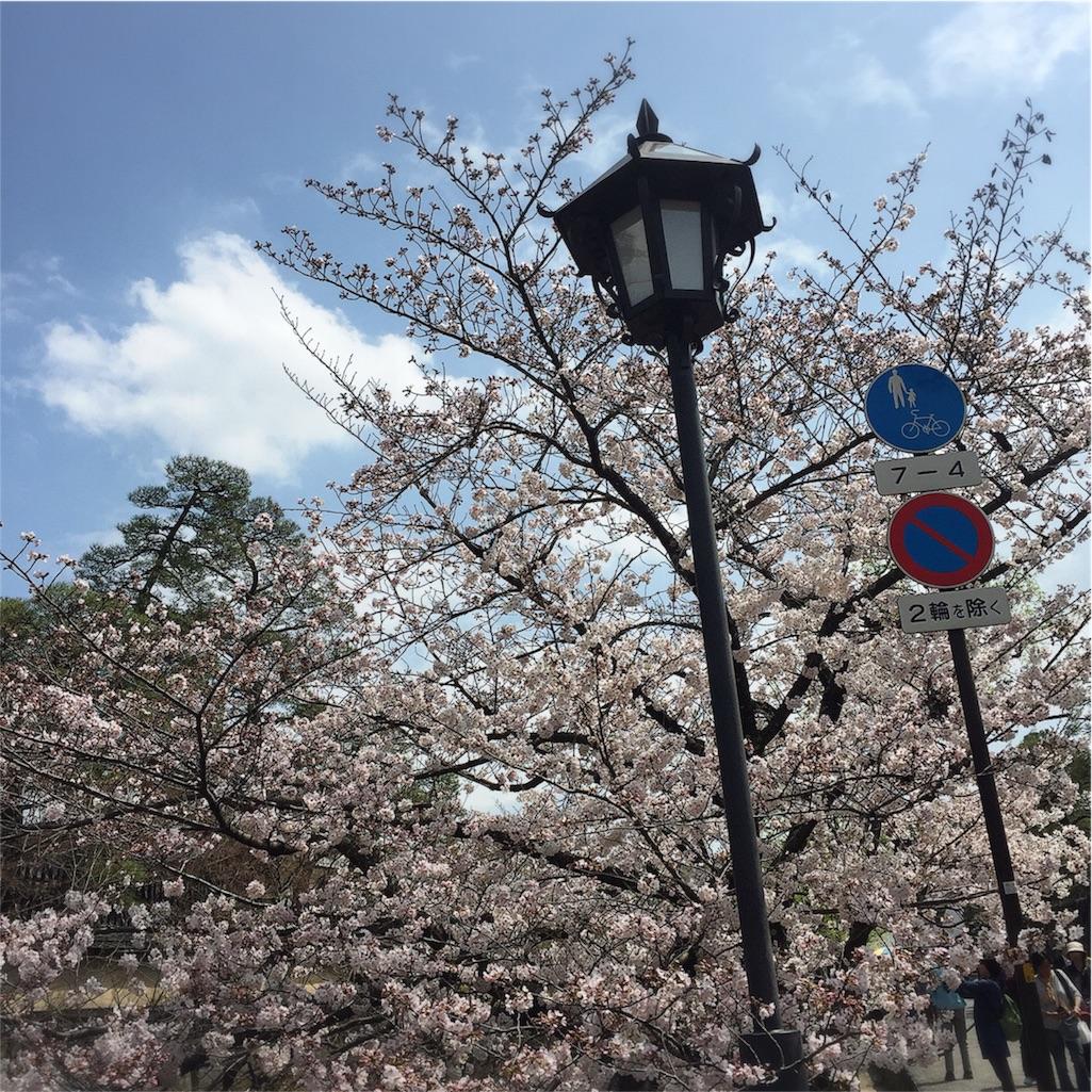 倉敷 美観地区 桜 写真