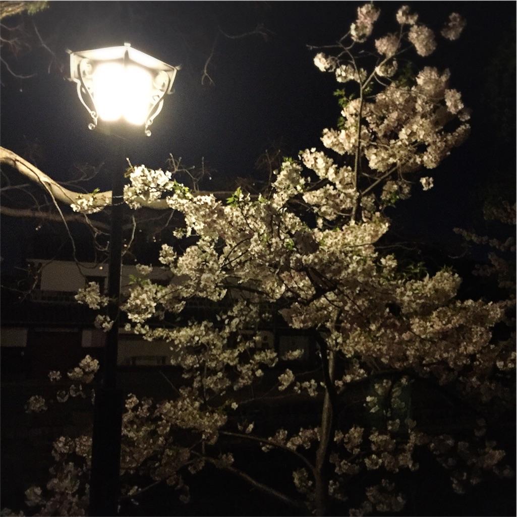 倉敷 美観地区 夜桜 写真