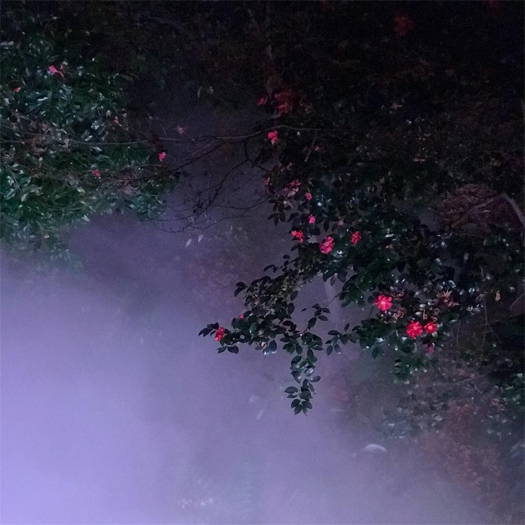 夜の花 写真