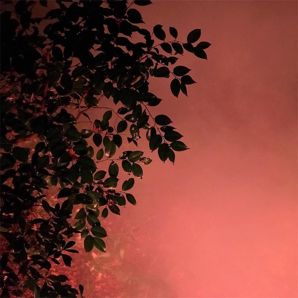 夜の樹 写真 赤