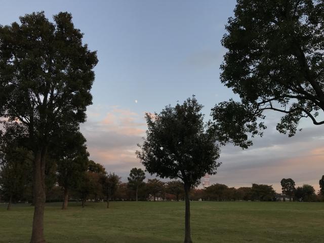上限の月と公園 写真