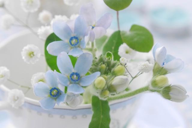 青い花 写真