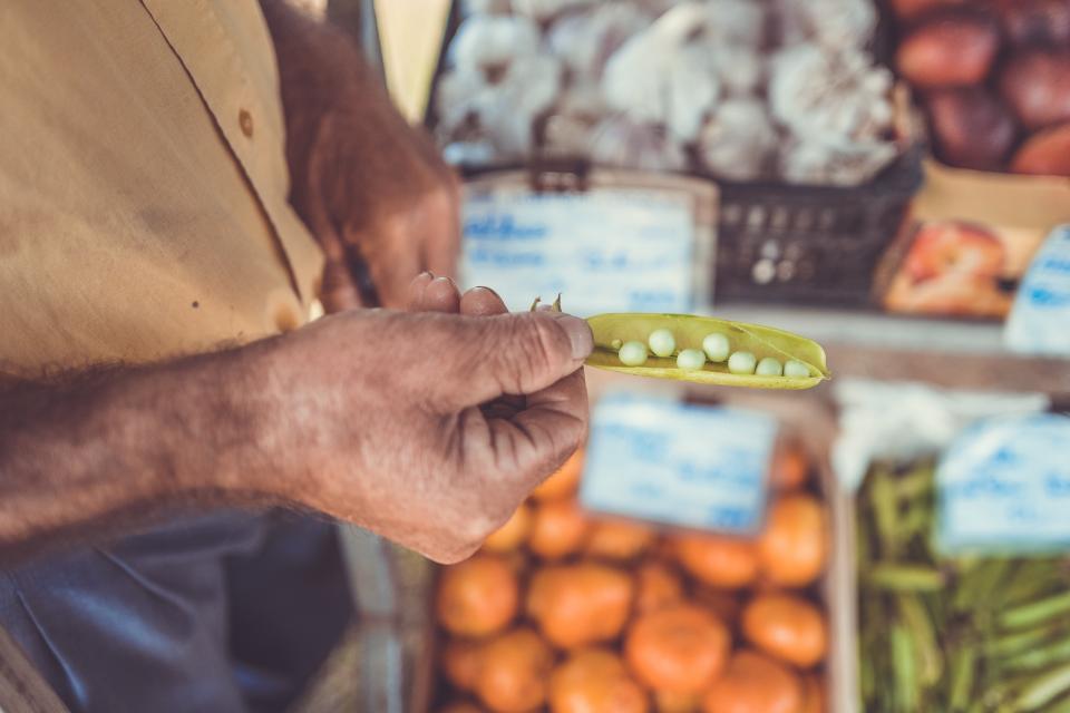 タンパク質 植物性 大豆