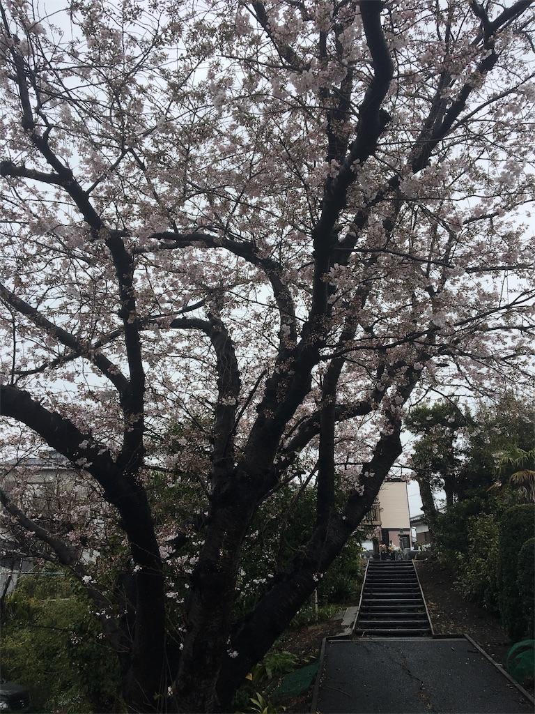 天気 お花見 雨