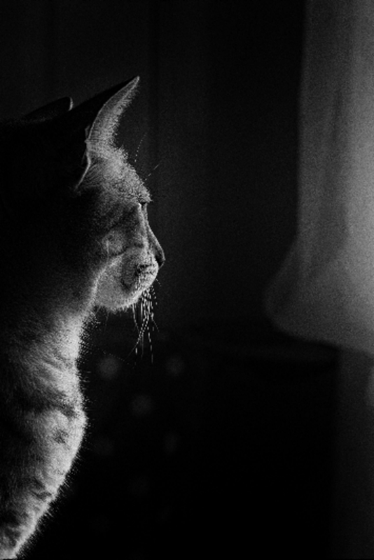 By Pixtabay.