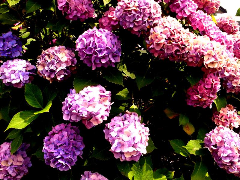 f:id:akagaitamori:20120708130345j:image