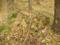 炭焼き釜の跡